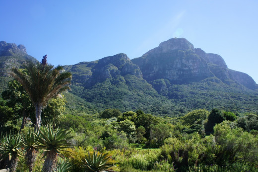 Table Mountain from Kirstenbosch