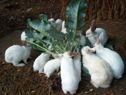 Top 10 Steps To Better Rabbit Health | Rabbit's Guide