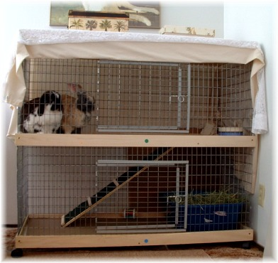 rabbit's cage should also be weather-proof--if not, then perhaps you should place its cage inside your house