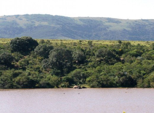 Elephants playing in the lake, how many elephants can you see?