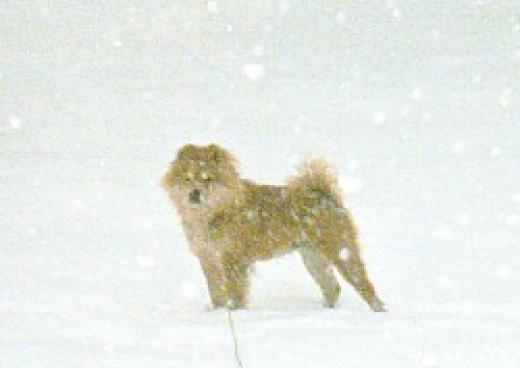 Chessie in her beloved snow with a smile on her face.