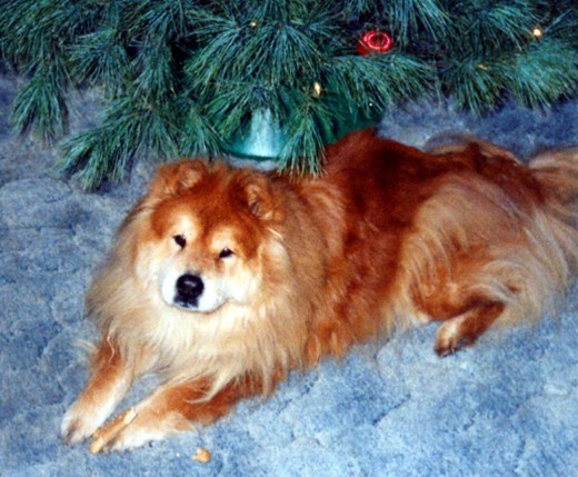 Chessie, The Chow Chow - Rest In Peace