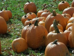 Why is it that when Halloween comes around it is usually marked with orange and black colors?