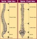 The Spinal Column: The Essential Structure That Supports Us and the Consequences of Injury Explained