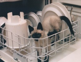 NOT a recommended way to wash your kitty.