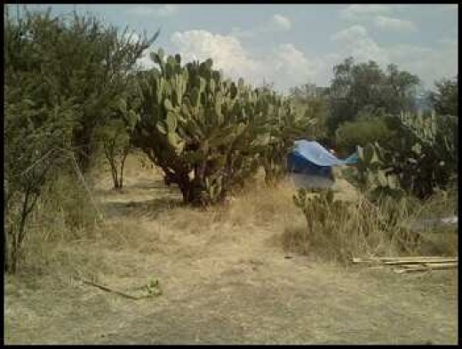 Camp site on Moon Dance grounds.
