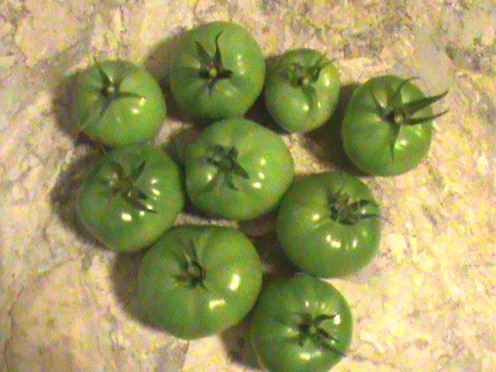 homegrown green tomatoes