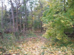 Woodland between the Queensway and Melton Drive, in proximity to Alan Bradley Park, Mississauga
