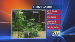 Legalization of Marijuana in Washington State Part V: Concerns Not Yet Addressed