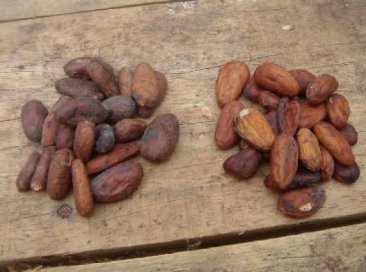 Cacao seeds.