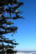 Celebrate Christmas on the California Coast