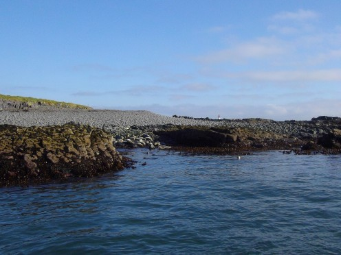 Seals in the water off the Farne Islands