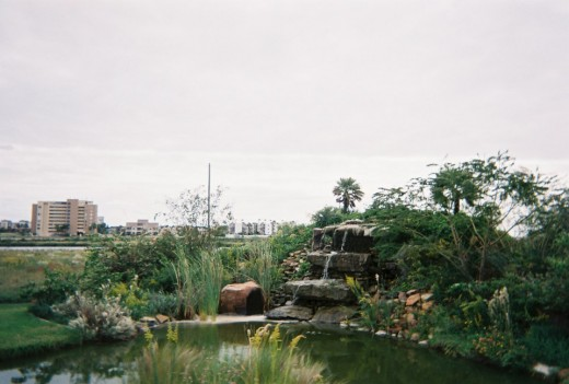 South Padre Island Birding Center:  Small waterfall and pond in front of the building.