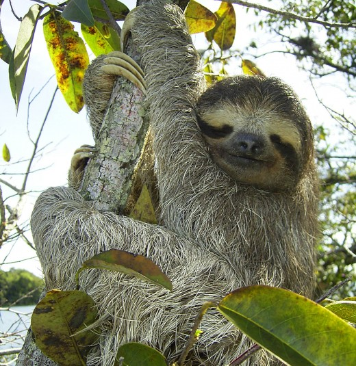 Are your hubs idle like this sloth?