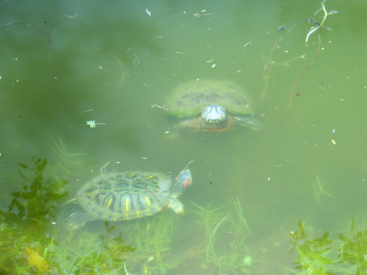 Natural turtle environment