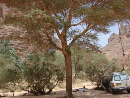 Essendilene canyon, the Sahara