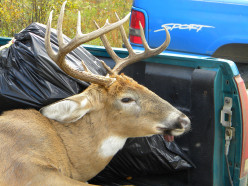 What is the Best Whitetail Deer Hunting Rifle