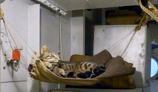 Even a ship's cat needs its own hammock