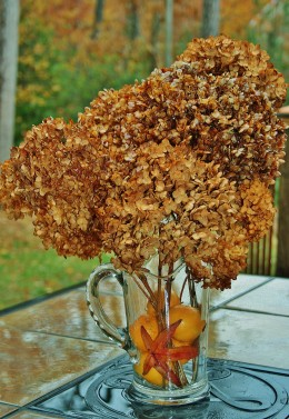 Autumn leaves and clementines add a bit of color to dried hydrangeas.