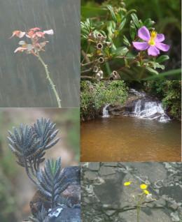 Bulutota flowers and a waterfall