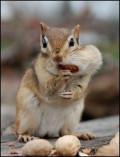 """""""Nutsy""""  My Squirrel Friend"""
