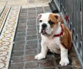 Find A Puppy Really Cheap At These Places