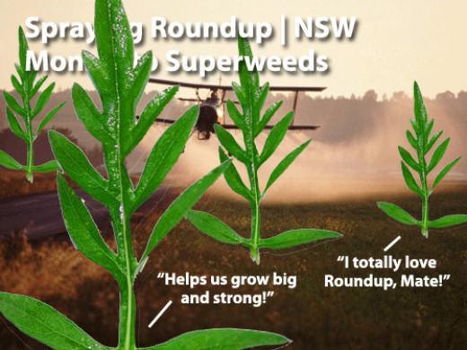 superweeds