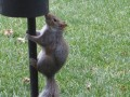 How To Take A Squirrel Seriously