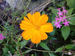 I rarely see an orange blossom.  This one captured my attention as it was a pop of color among the grassy lawn borders.