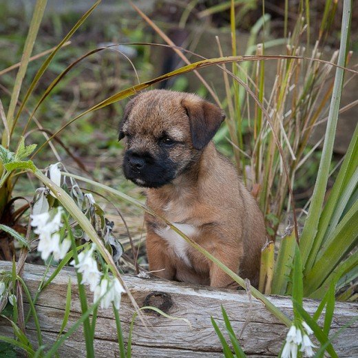 Petfinder may help you find puppies outside of your area.