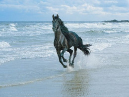 We may not be able to gallop like this beauty, but  gentle excercise, walking is a real help ..