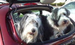 15 Tips For Safe Travels With Your Pet