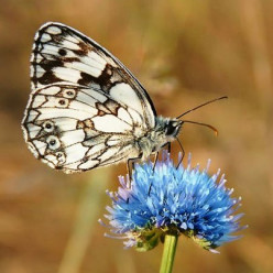 Is there a Spiritual Significance to Butterflies?