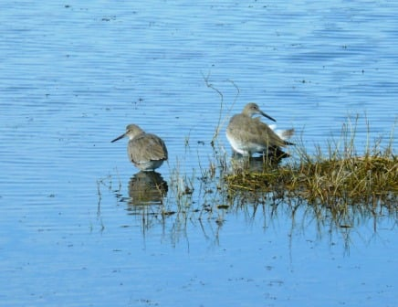 Waders -on Merritt Island Wildlife Refuge - a great birding place