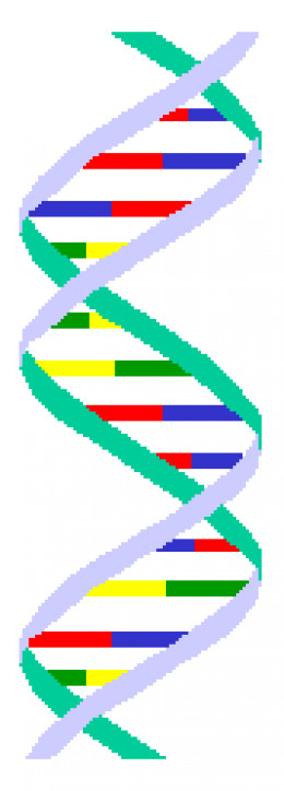 Our DNA predisposes us to certain behaviors.