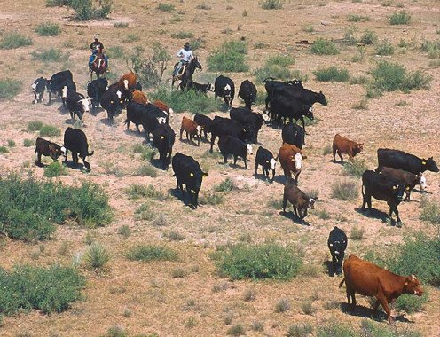 21st Century cattle round up in New Mexico.