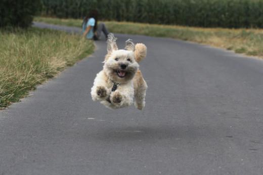 Go Doggie Go!