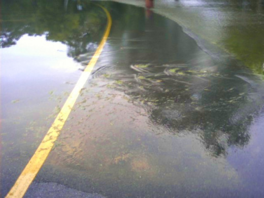 One of the conditions Wweather Spotters are trained to report is flash flooding.
