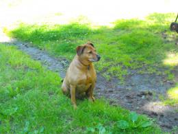 Sitting pretty waiting for my leash.