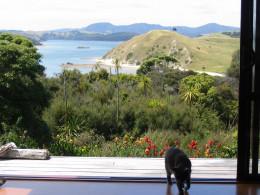 My cat Twinkle in my house, Kaiwaka, NZ
