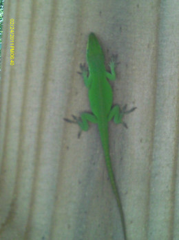Our lizard friend