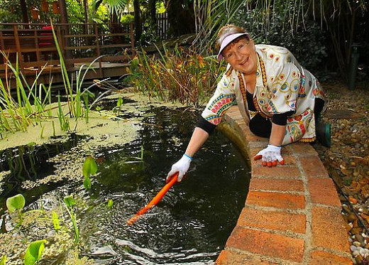 Building A Backyard Pond By Converting Your Swimming Pool Hubpages