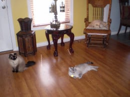My indoor companions (from left to right) Shiloh, Sheba and Axel,.