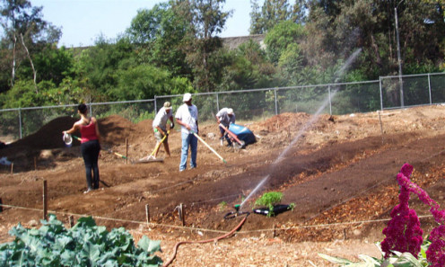 The student irrigation crew installs new lines, while learning how drip irrigation works.