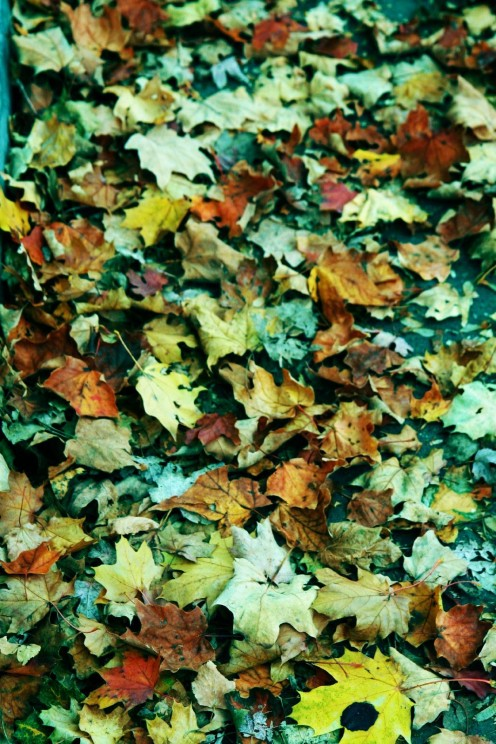 just like autumn leaves, our skins get drier and need extra moisturizing in winter time.