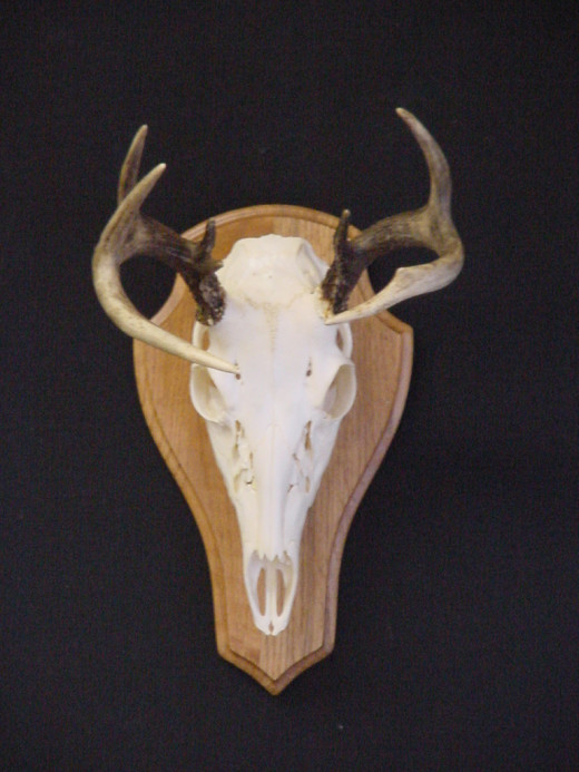 Common wall mount attached to a flat plaque.