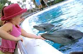 A close encounter of the Dolphin kind.