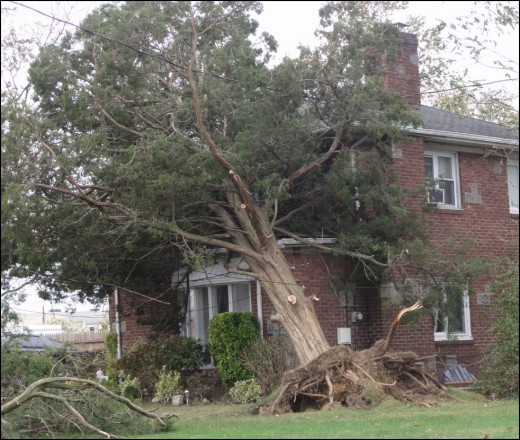 House damages from tree falls