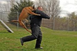 Police Dog in Tranining