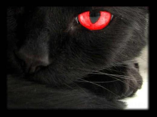 The Black Cat Omen gypsymagicspells.blogspot.com